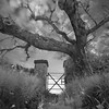 Gate and tree, McArthur's Head , Isle of Islay, Scotland