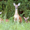 Doe and her twins