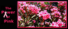 Pink Oleander 11 LOGO - signed image with logo, configured to wrap around a 11-oz. mug.  This is shown only as an example. Please send enquiries about custom orders for merchandise incorporating your company or organization's logo to tinlight7@gmail.com.  The stretching cat watermark will not appear on your merchandise.