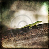 Gecko Green Cameleon Lizard on Brown Wood Branch