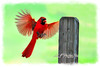 Male cardinal landing on post  to purchase - http://dan-friend.artistwebsites.com/featured/male-cardinal-landing-on-post-dan-friend.html