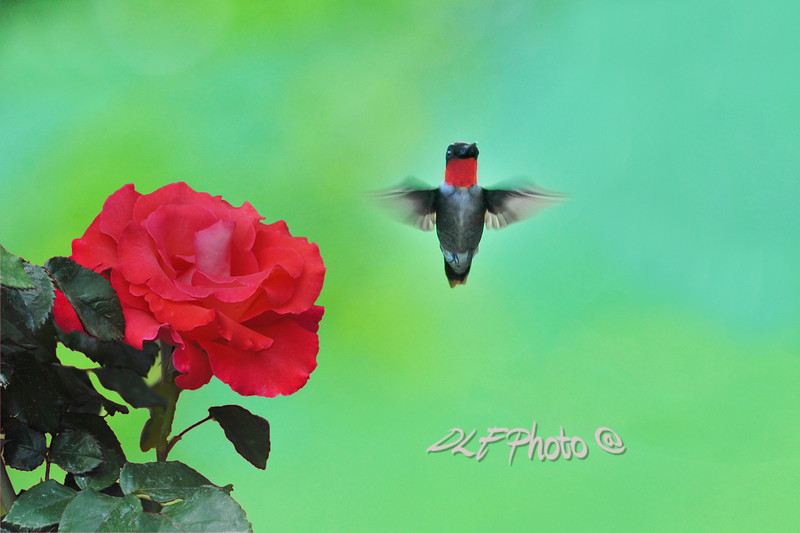 Hummingbird standing tall  to purchase - http://dan-friend.artistwebsites.com/featured/hummingbird-standing-tall-dan-friend.html
