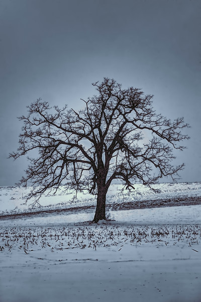 barren winter scene with tree...................................to purchase - http://dan-friend.artistwebsites.com/featured/barren-winter-scene-with-tree-dan-friend.html?newartwork=true