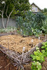 Urban Vegetable Garden - composting_3682