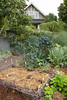 Urban Vegetable Garden - composting_3680