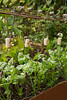 Urban Vegetable Garden - plant protection_3703