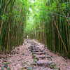 18.Bamboo Forest on the Pipiwai Trail.