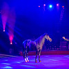 Performing Horse with Trainer el Circo Hermanos Vázquez