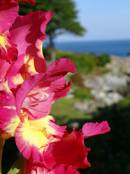 Glads by the ocean