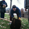 Iowa City TreeKeeper volunteers prune pot-bound roots on a river birch tree in Lower City Park in the fall of 2013. DH