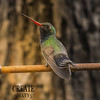 Photo #89/365 - Blue-Throated Hummingbird!