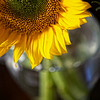 jun12-sunflower-stems