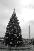 Project 52 - RDH Photo 48 - National Christmas Tree - 12-16-2012