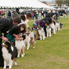 20140301_Australian Shepherds_Scottsdale -471