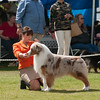 20140302_Australian Shepherds_Scottsdale -273