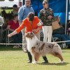 20140302_Australian Shepherds_Scottsdale -276