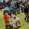 20140302_Australian Shepherds_Scottsdale -293