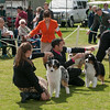 20140302_Australian Shepherds_Scottsdale -290