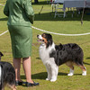 20140302_Australian Shepherds_Scottsdale -321