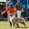 20140302_Australian Shepherds_Scottsdale -274