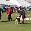 20140302_Australian Shepherds_Scottsdale -419