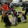 20140302_Australian Shepherds_Scottsdale -291