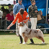 20140302_Australian Shepherds_Scottsdale -275