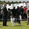 20140302_Australian Shepherds_Scottsdale -288