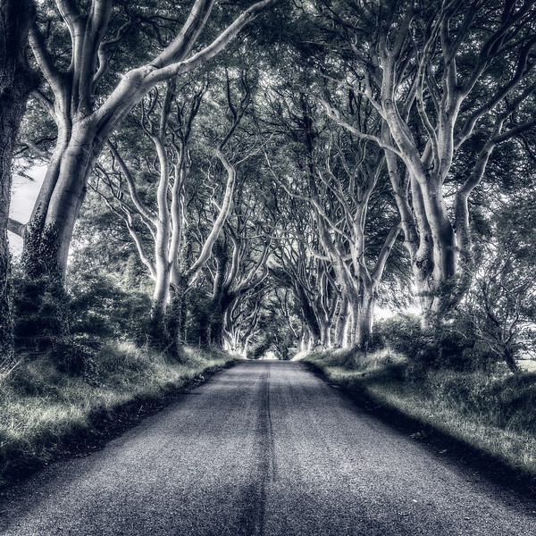 """The Dark Hedges"" Cool View"