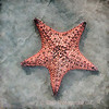 Starfish On Artistic Sand
