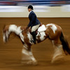 A contestant at the Pinto World Championships gallops around the show ring in Tulsa Friday.