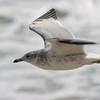 seagull in flight over the ocean