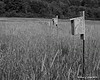 06.30.2014 <br><br>This row of birdhouses sits in a field behind the Croydon Fire Department