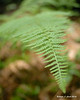 07.07.2014 <br><br>A fern along a bike trail