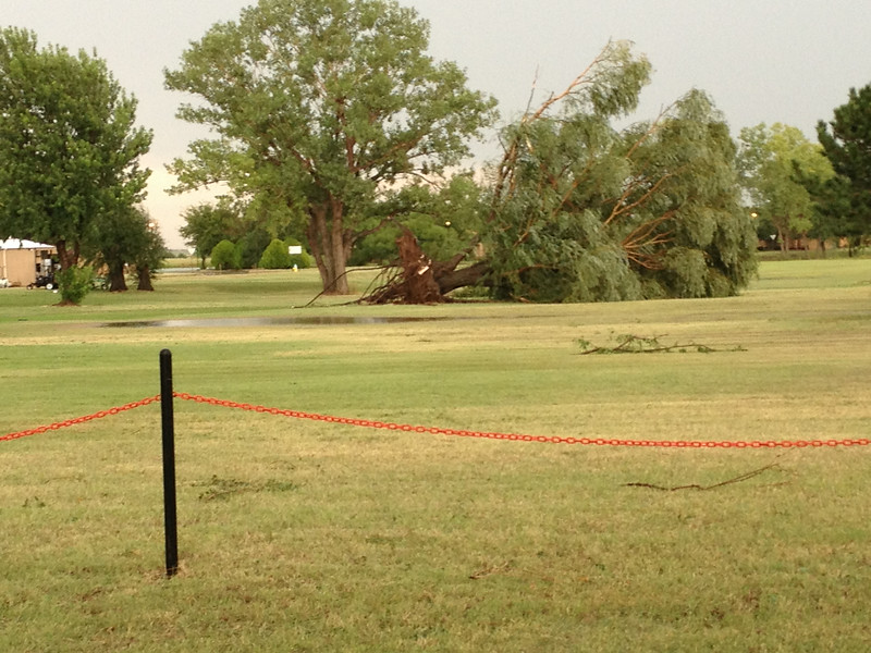 A tree is uprooted at Golden Oaks Aug. 18, 2014.