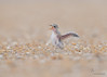 <center><font>Least Tern hatching</font></center><font></font><center><font>Summer Haven, Florida</font></center>