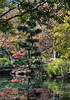 Pond View in Autumn #1, 2014 <br /> <br /> ©Gerald Diamond<br /> All Rights Reserved