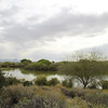 Riparian Preserve in Gilbert, AZ - March, 2014
