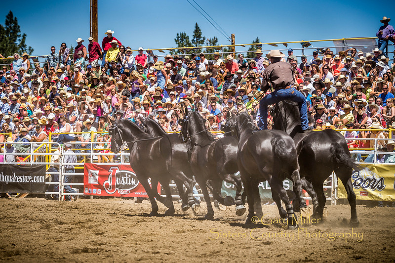 Jason Goodman riding the Percheron Thunder team at Saturday afternoon's performance of the 2013 Sisters Rodeo - Sisters, Oregon - Copyright © 2013 Gary N. Miller, Sisters Country Photography