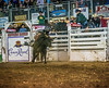 Chase Sherman has a wild ride on Cookie Friday night at the 2014 Sisters Rodeo - Sisters, Oregon © 2014 Gary N. Miller, Sisters Country Photography