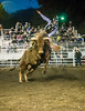 A.J. Hamre on Little Corey Friday night at the 2014 Sisters Rodeo - Sisters, Oregon © 2014 Gary N. Miller, Sisters Country Photography