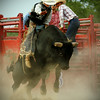 Bull riding at the rodeo, 1