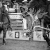 rodeo houston march 20 hr-2643