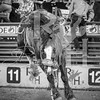 rodeo houston march 20 hr-2638