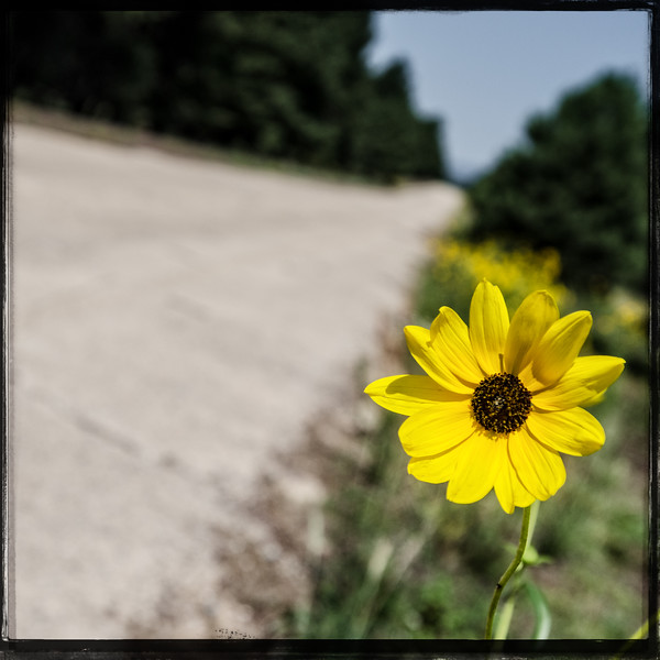 The Hitch Hiking Flower