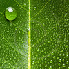green leave and water droplet background