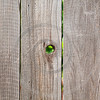rough wooden fencing with knot hole