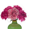 pink carnations in green vase