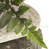 river rocks and fern isolated