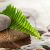green fern with rocks in river